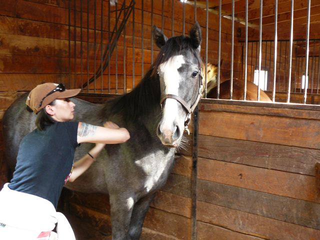 Inez massaging Redemption~ a yearling warmblood colt