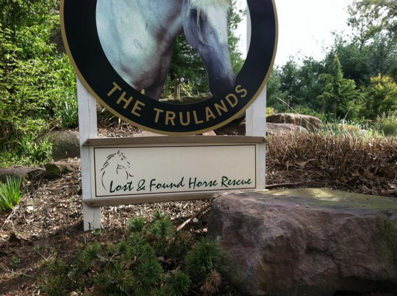 Lost and Found Horse Rescue