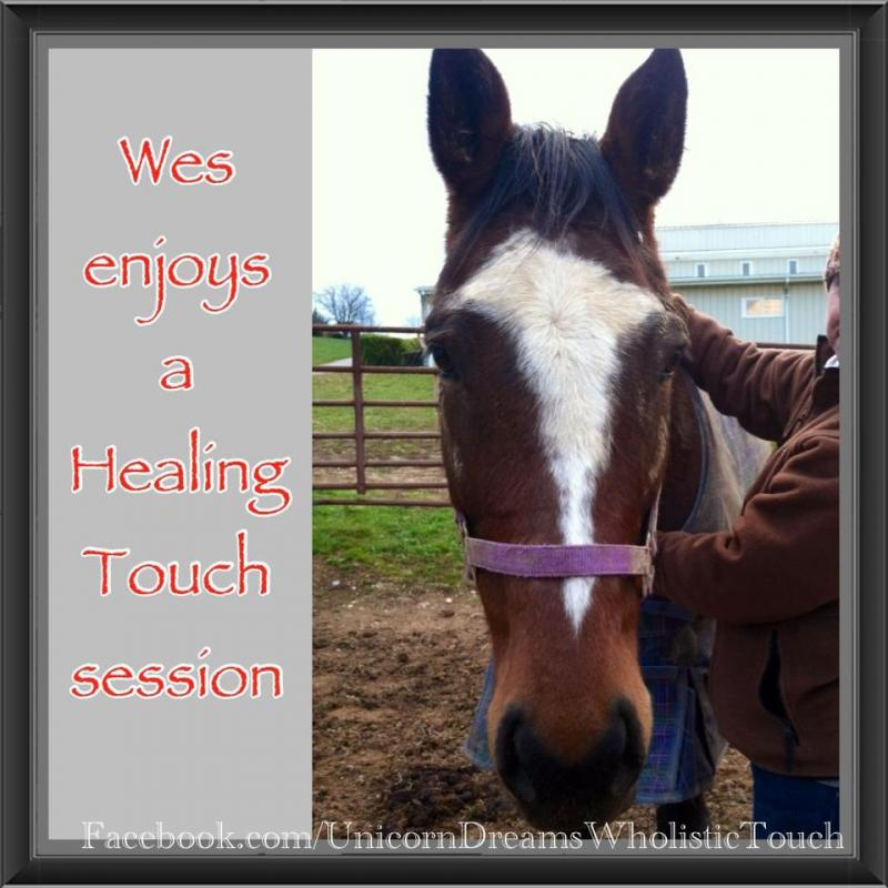 Wes enjoying some healing touch